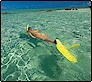 wadigi_island